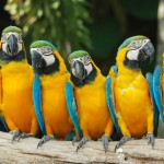 Why Leaders Don't Need Parrots