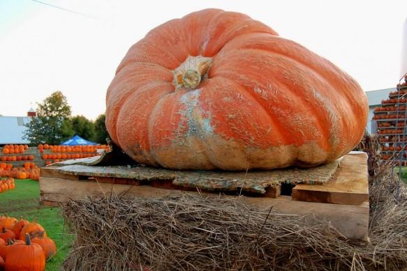 bigstock-Giant-Pumpkin-24162473