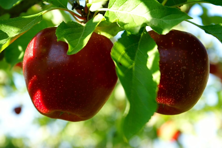 Pick the Low-Hanging Fruit to Improve Productivity