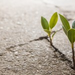 27 Practices Resilient Leaders Use to Thrive