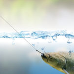 Don't Get Hooked! Why Successful People Don't Take the Bait