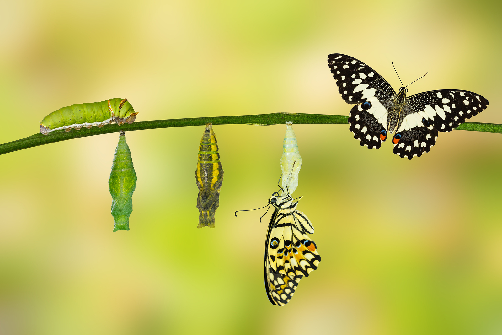 What A Caterpillar Can Teach You About Growing Your Business