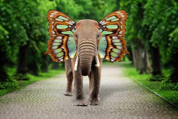 Elephant With Butterfly Wings