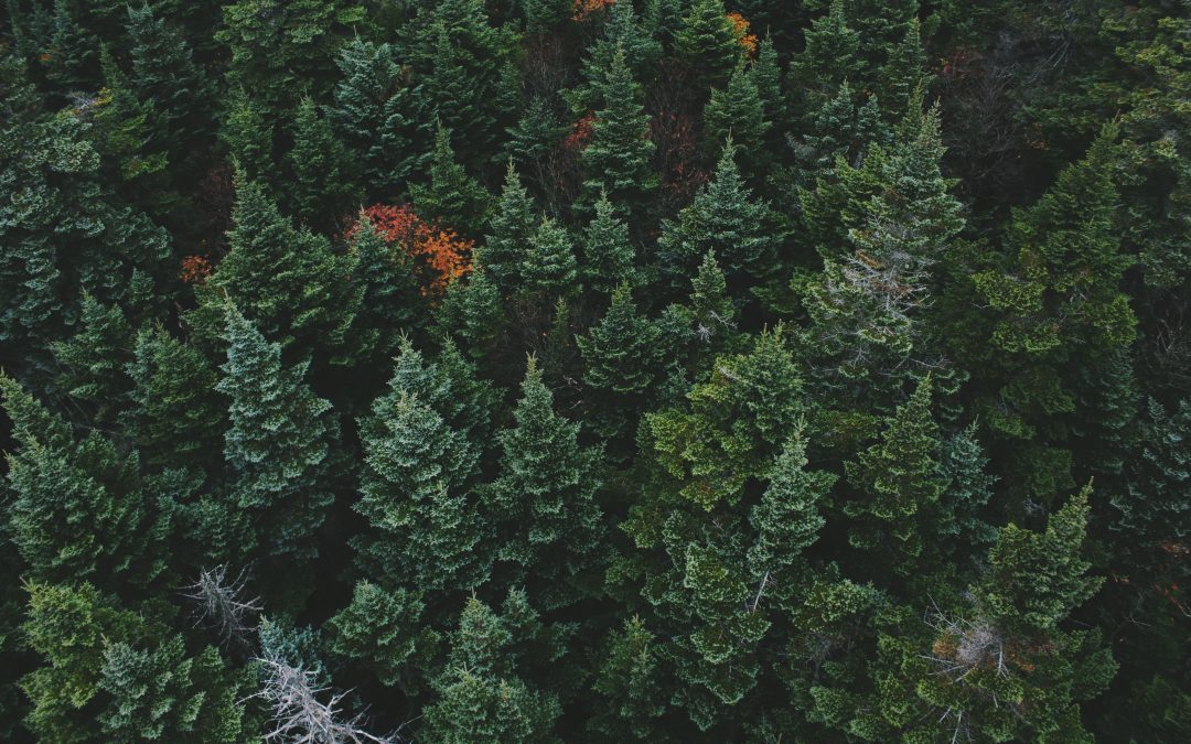 Cultivate Evergreen Talent in Your Workforce